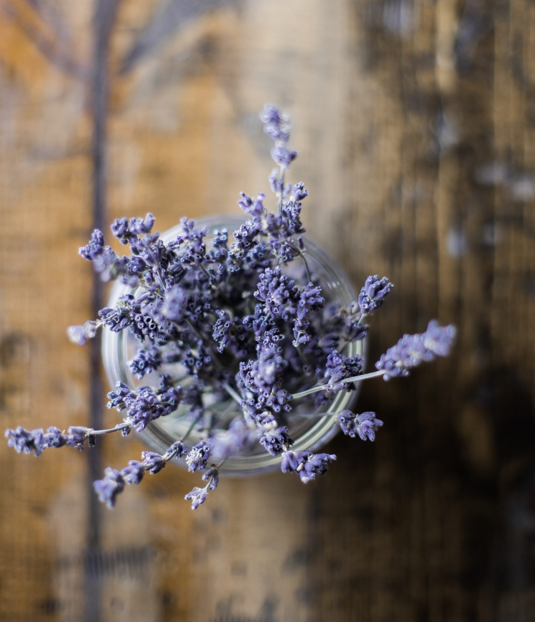 Benefits and Uses of Lavender Essential Oil